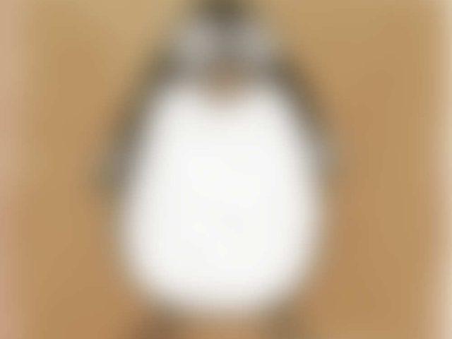 Pingu Penguin